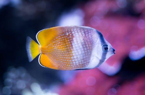 Feng Shui Fish tank