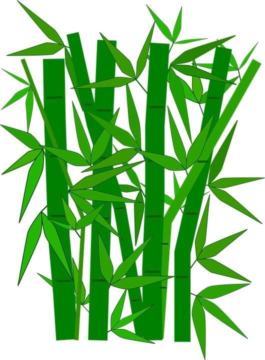 Feng Shui Lotus Bamboo
