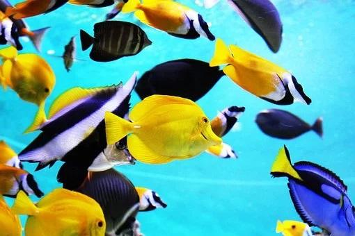 Fish tank shui
