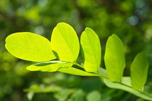 Feng Shui Green Plant