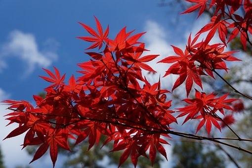 Feng Shui Garden Fire
