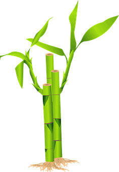Meaning of Feng Shui Lucky Bamboo