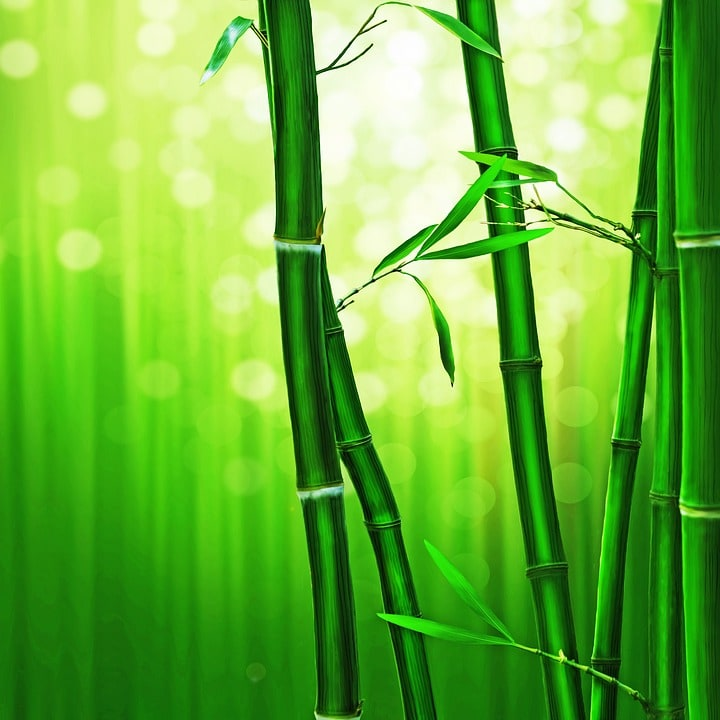 Feng Shui Lucky Bamboo Benefits