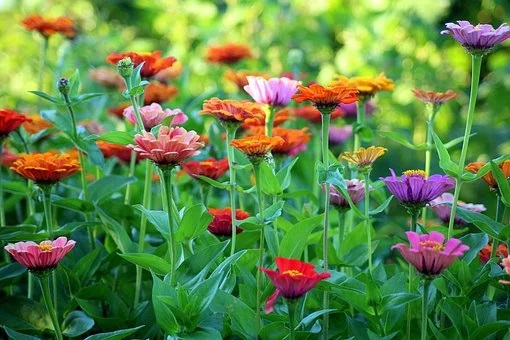 Feng Shui Colors For Your Garden