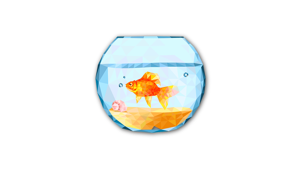 Feng Shui Birth element Fish tank