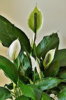 feng shui for protection green plant
