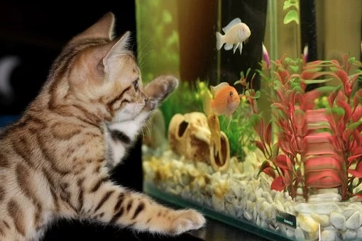 Aquarium Fish For Wealth