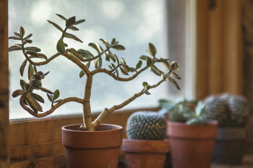 Feng Shui Home Plants