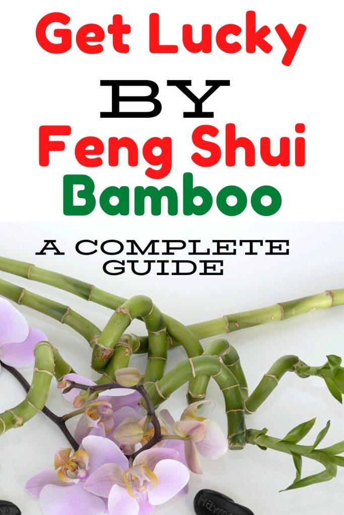 Feng Shui Lucky bamboo