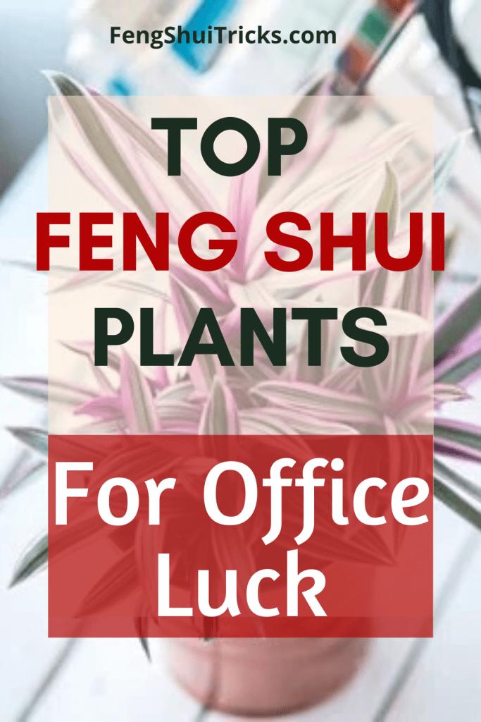 Feng Shui Office plants
