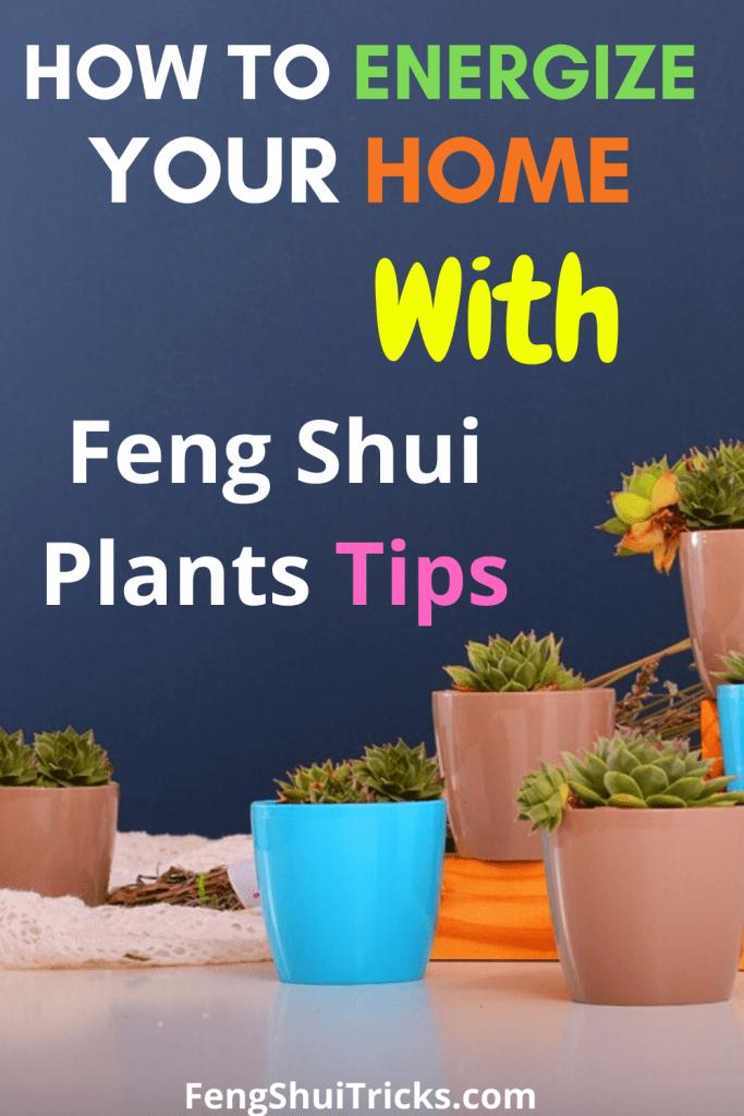 feng Shui Plants home