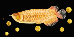 What Are The Different Types Of Arоwаnа Fish + Their Characteristics