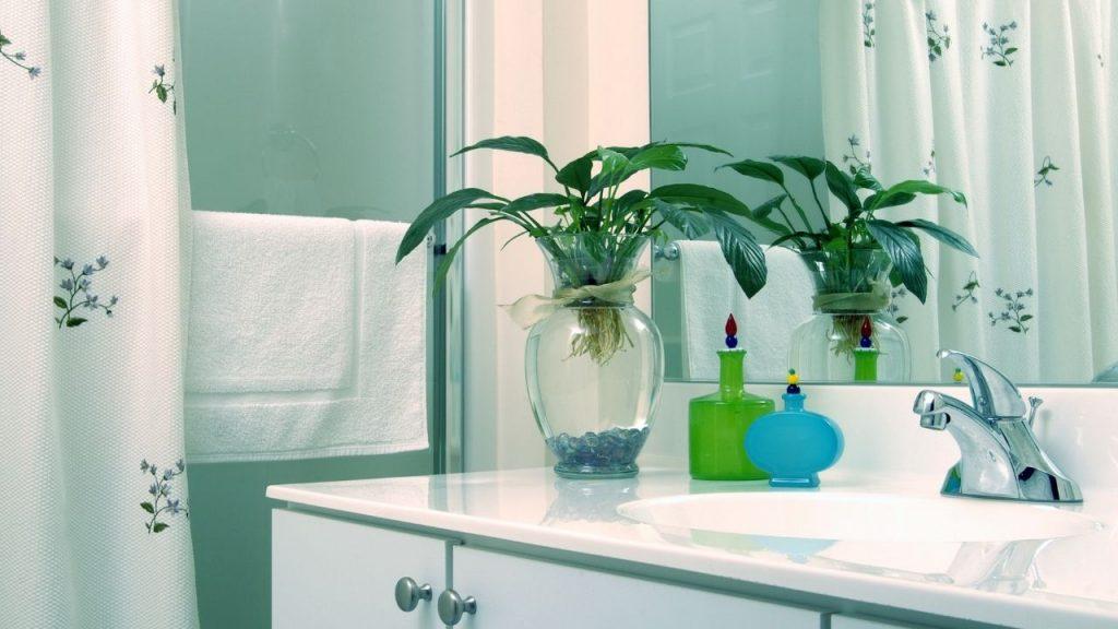 Best Feng Shui Bathroom Plants