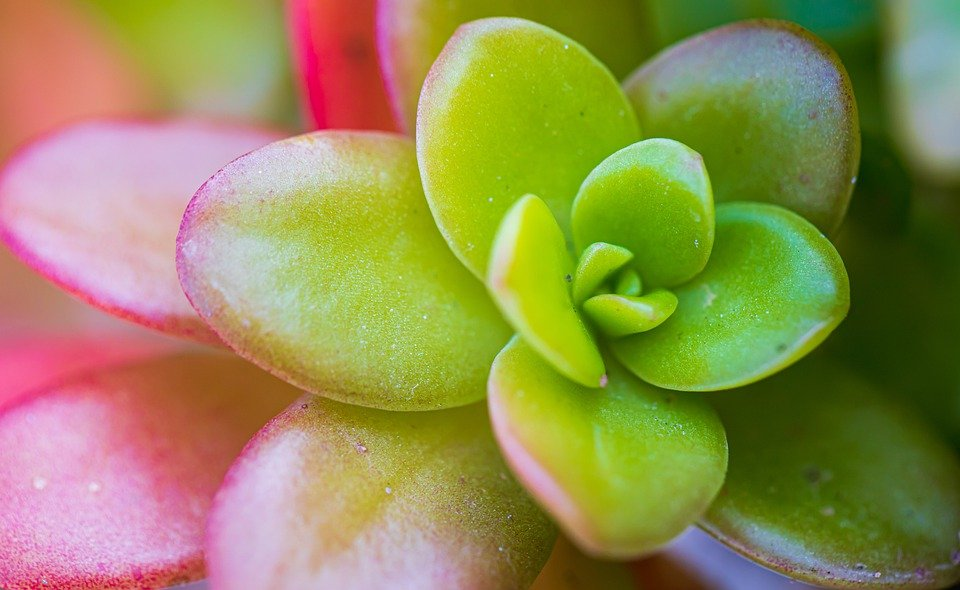Feng Shui Jade Plant meaning