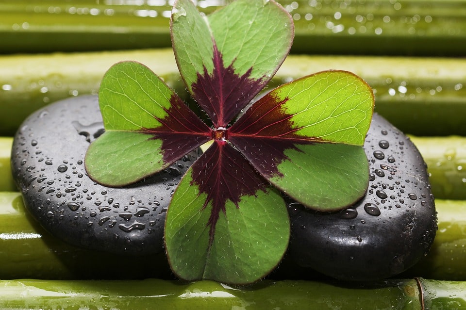Four Leaf Clover Spiritual Meaning
